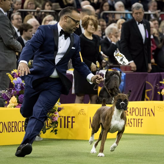 Westminster Dog Show Winners 2017