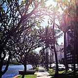 Run Along the Ala Wai Canal