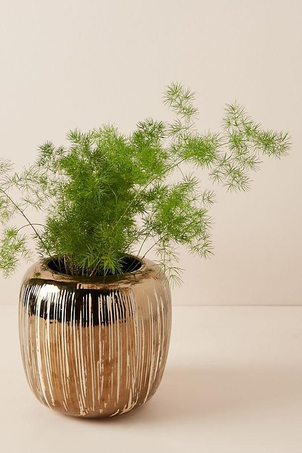 Copper-Striped Pot
