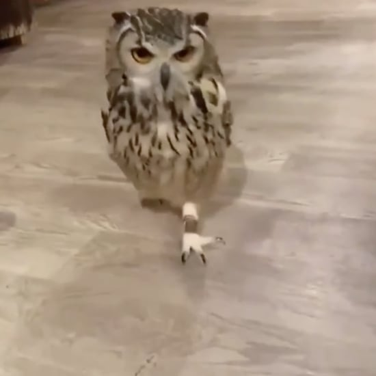 Funny Video on Reddit Shows How Owls Run