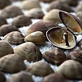 Clamshell Lovers