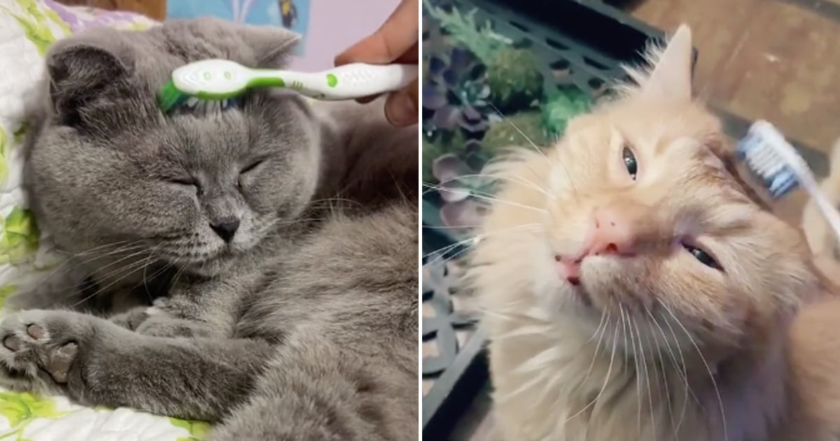 People Are Using Wet Toothbrushes on Cats to Mimic Their Moms' Licking, and I'm a Mess