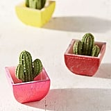Potted Cactus
