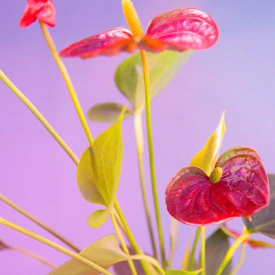 Best Indoor Flower Plants For Beginners