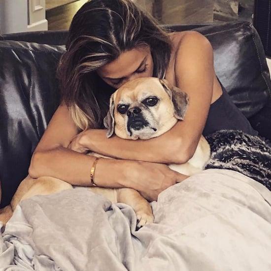 Jana Kramer's Dog Dies 2017
