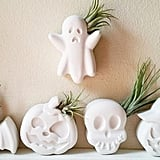 Spooky Air Plant Holders