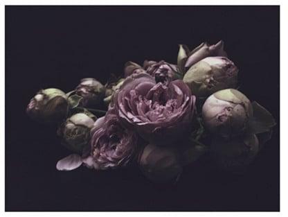 Dark Floral Fine Art Print ($250)