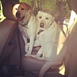 It's puppy love. Source: Instagram user mandinvilla