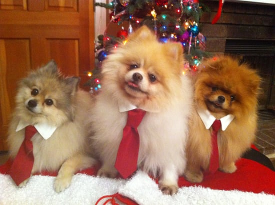 Dressed up Holiday Poms