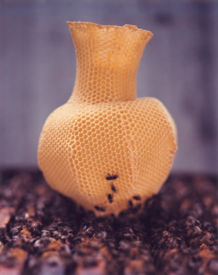 Coolest Idea: Honeycomb Vase