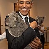 He's held a koala!