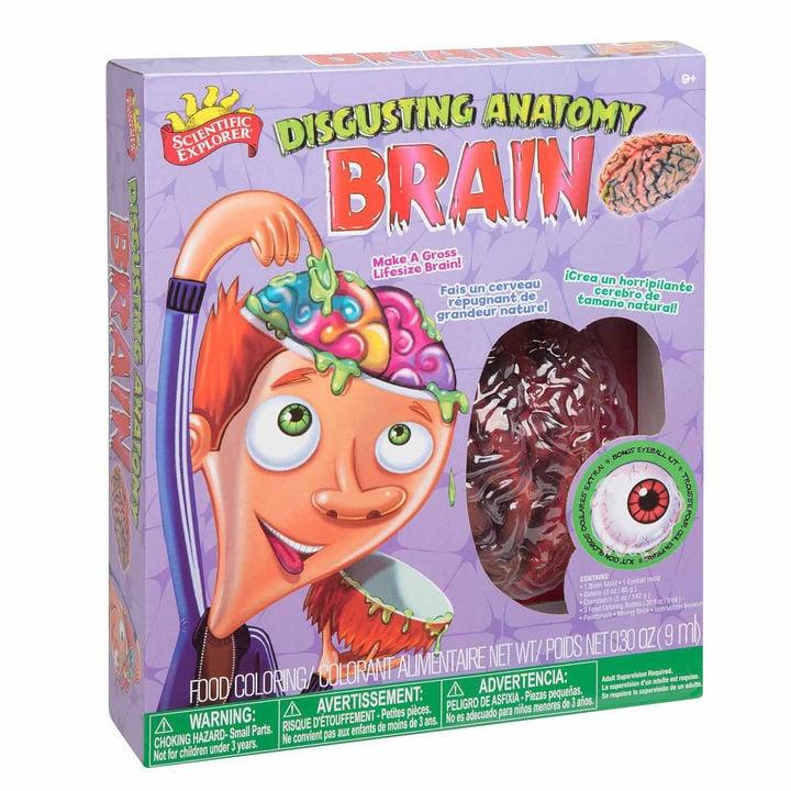 Scientific Explorer Disgusting Anatomy Of The Brain Science