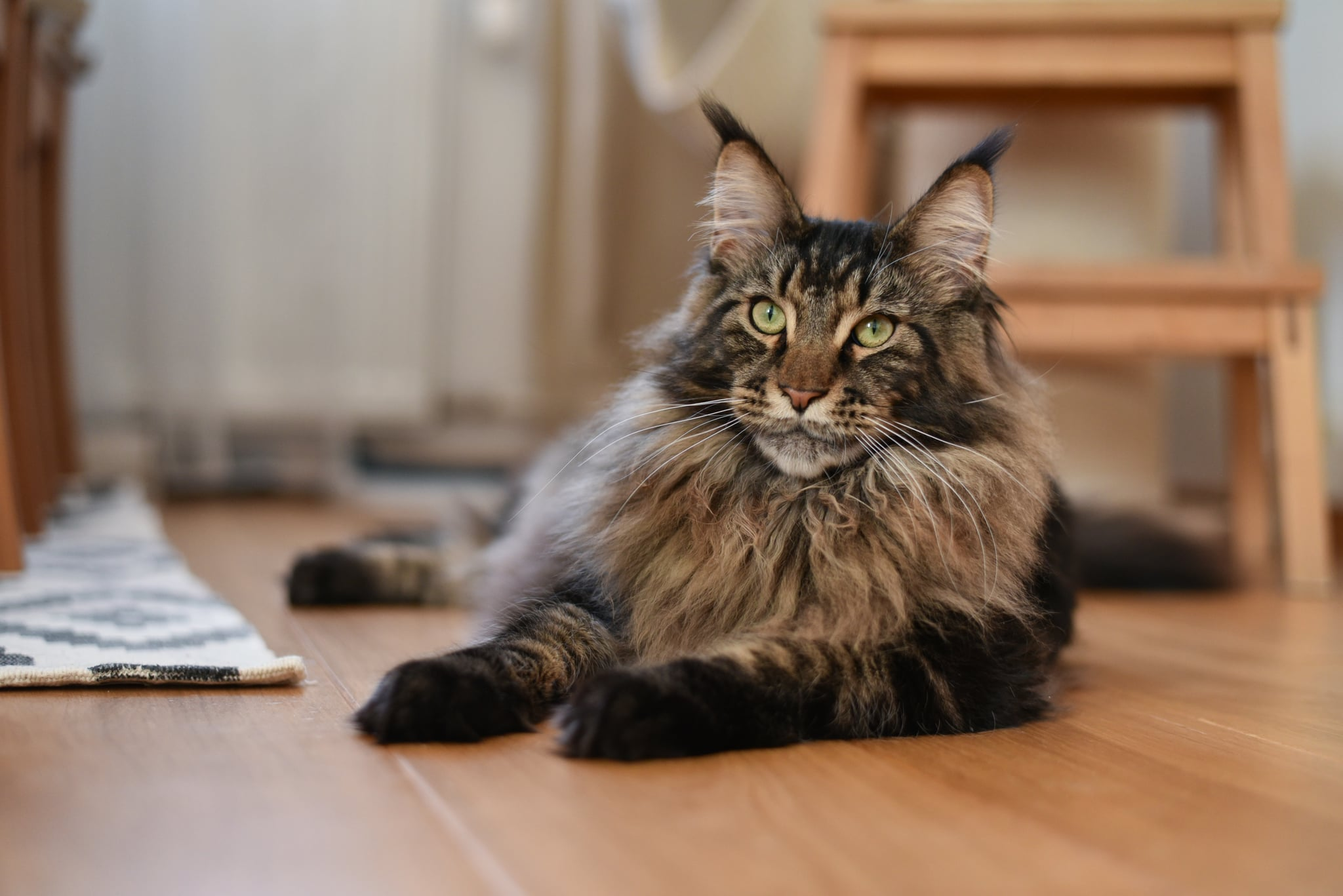 The 17 Best Cat Breeds For First Time Owners Popsugar Pets