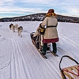 Alaskan Wilderness Dogsledding (Anchorage, AK)