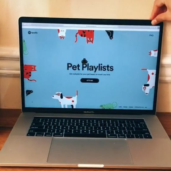 How to Make a Spotify Playlist For Your Pet