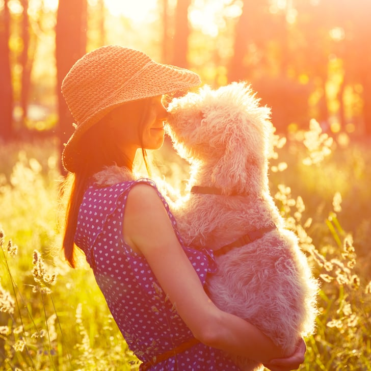 Why You Should Adopt an Adult Dog