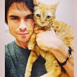 Cat selfie: necessary. Source: Instagram user iansomerhalder