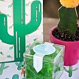 Cactus Gummies