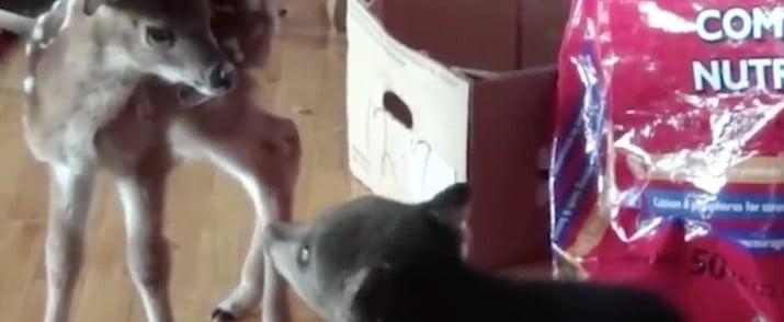 Baby Bear Kissing Deer GIF