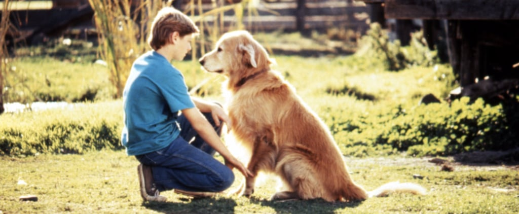 A Note to Everyone Who Was Emotionally Terrorized by Homeward Bound