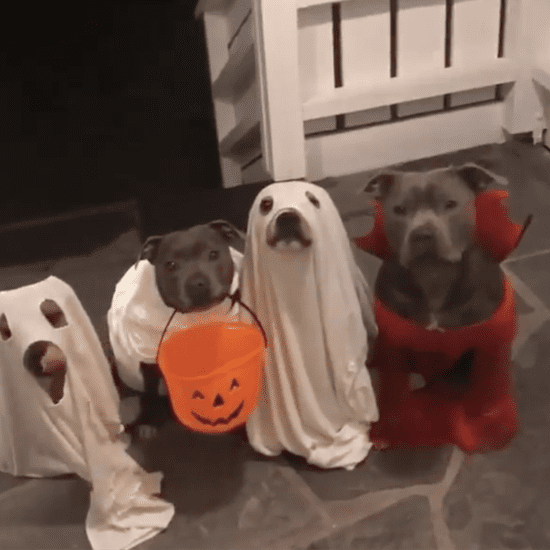 Video of Dogs Trick-or-Treating
