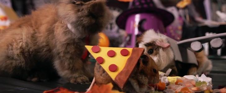 فيديو لهامستر صغير يحتفل بعيد الهالوين