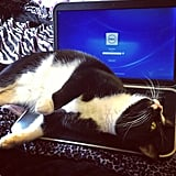 It's about that time — a few tips for cleaning your laptop. Source: Instagram user sarahliz266