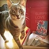 Cats in POPSUGAR Must Have Boxes