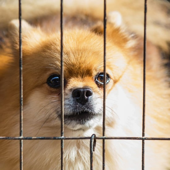 Should You Crate Your Dog All Day?