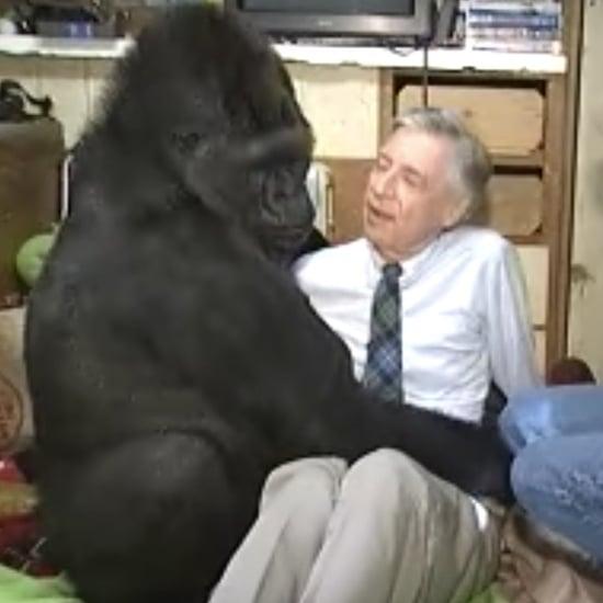 Koko the Gorilla Meeting Mr. Rogers Videos