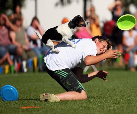 Follow Frisbee Fetching, Freestylin' Furry Friends!