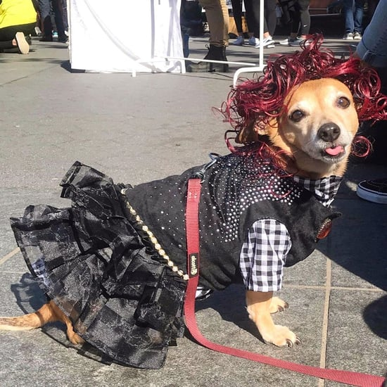 Dog Dressed Up as Moira Rose From Schitt's Creek | Photos