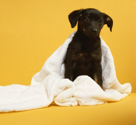 New Year's Petsolution: Donate the Clutter