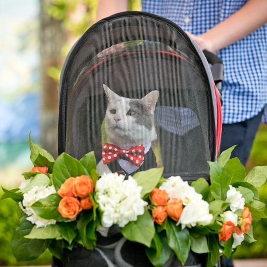 Cat Ring Bearer Wedding