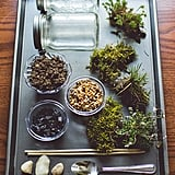 DIY Moss Terrarium Craft