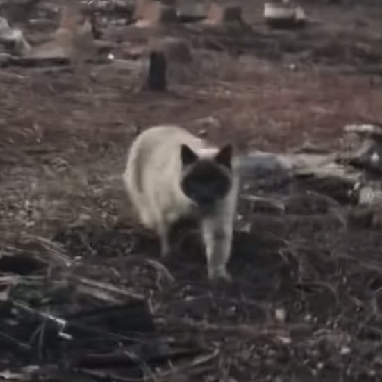 Woman Reunited With Cat Timber After Camp Fire in CA