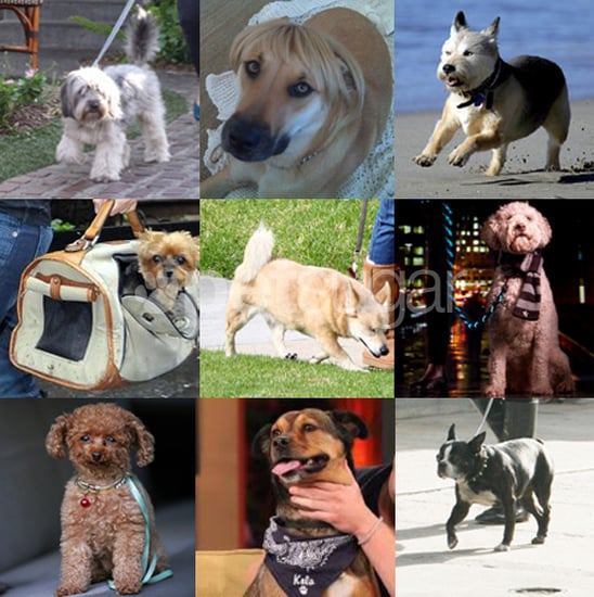 Who's Your Favorite Furry Face of 2009?