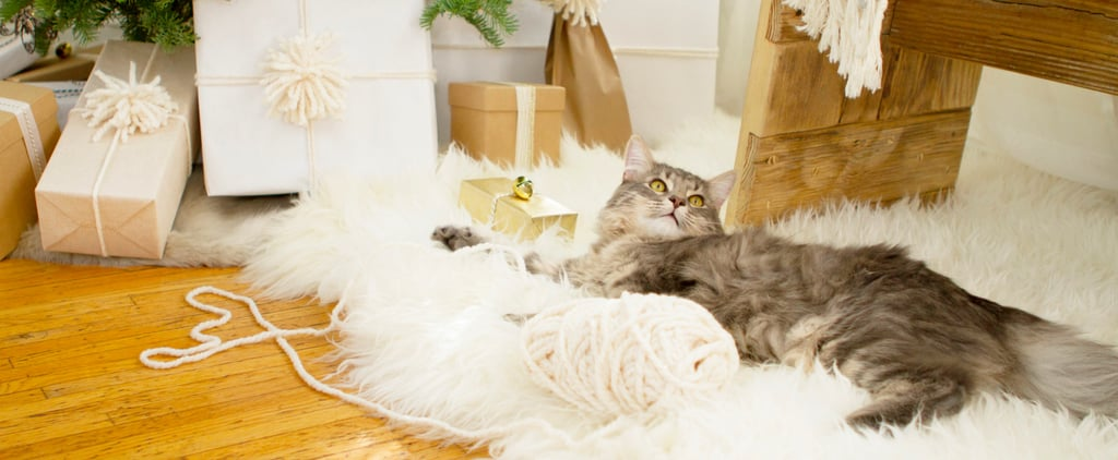 The Lazy Pet Owner Will Love This New Toy For Cats