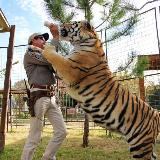 Tiger King: Why Joe Exotic Is a Bad Guy