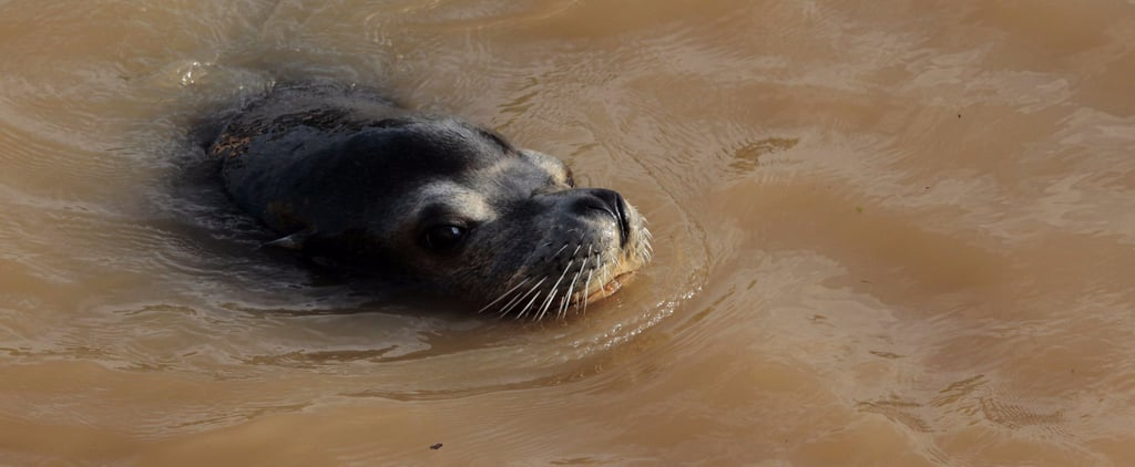 "Why People are Slamming ""Reckless"" Parents After a Sea Lion Dragged Their Girl Into the Water"