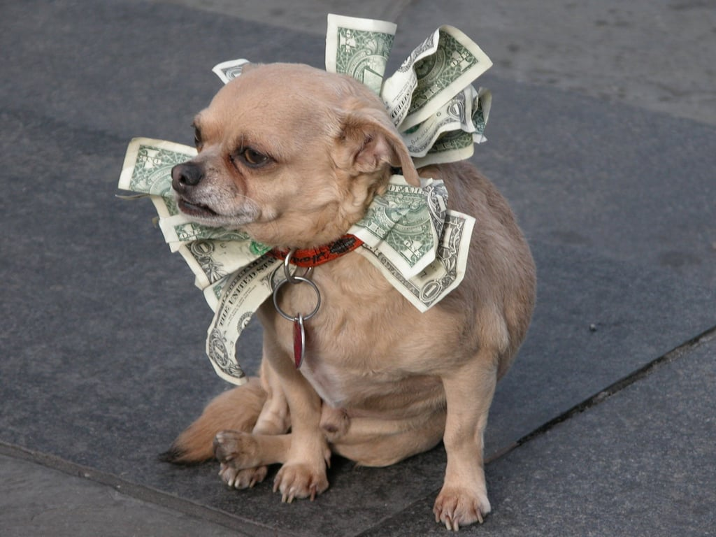 Chien argent
