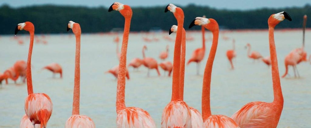 If You Love Flamingos, You'd Better Book Your Summer Vacation For Celestún, Mexico