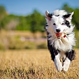 Cute Pictures of Border Collies
