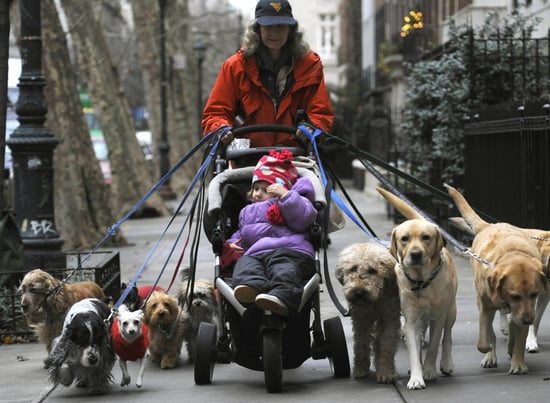 What's Your Take: Should Dog Walkers Be Licensed?