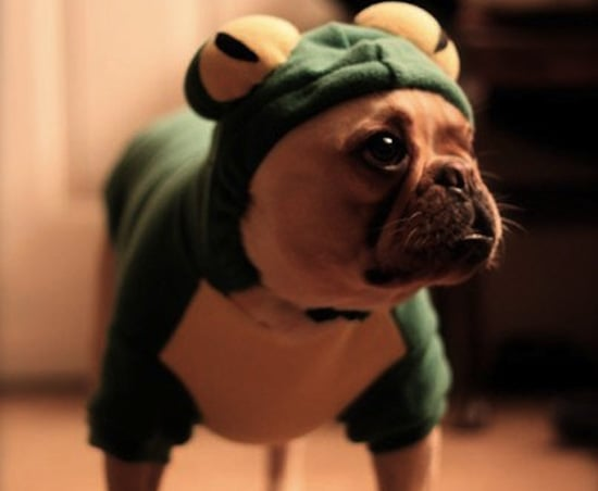Costumed Creatures! Peep Sweet Halloween Pics From All of You