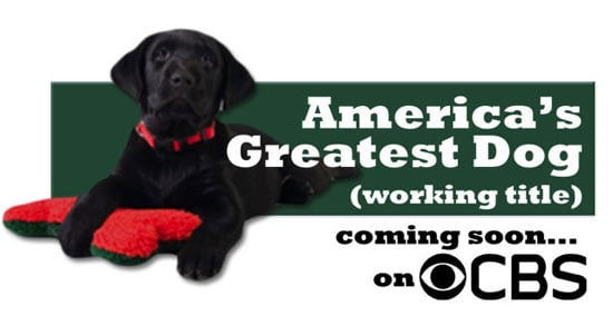 America's Greatest Dog Casting Call