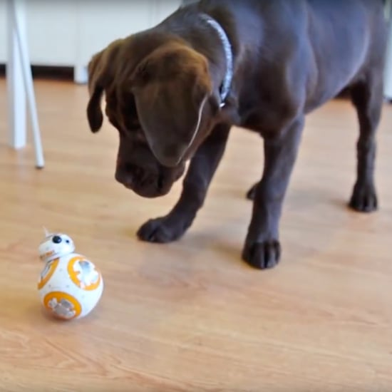 Puppy Meets BB-8 Toy
