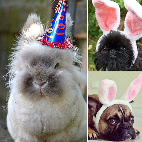 Pets Dressed as the Easter Bunny