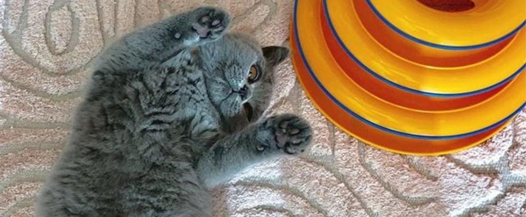 Photos of Beth Stern's Cat Helen Rose