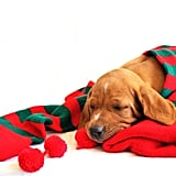 Sleeping the Winter Away